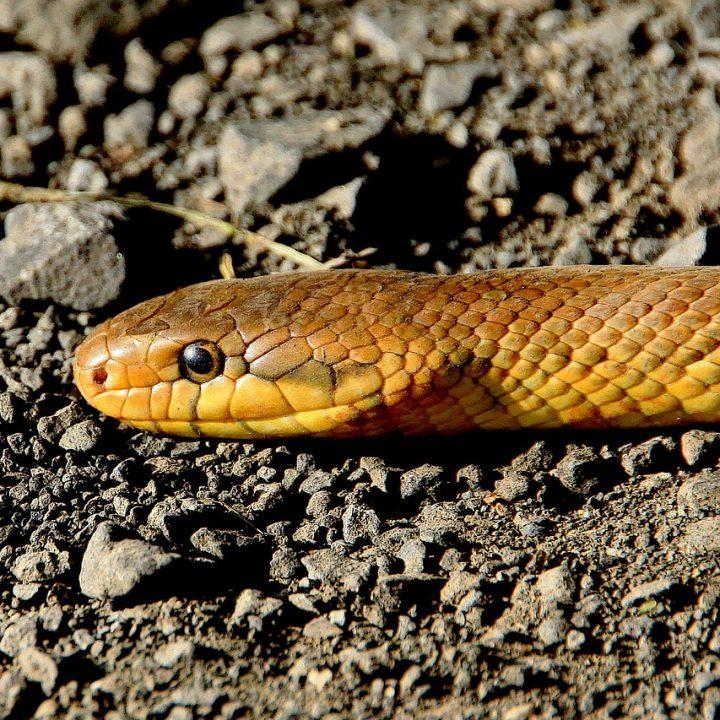 snake, reptile, animal