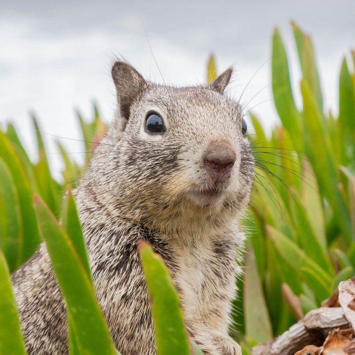 surprised, sweet, animal